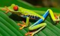"""¿Por qué la biodiversidad es """"sexy"""" para la economía?"""