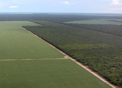 Forestacion en Brasil: el conflicto economía-ambiente