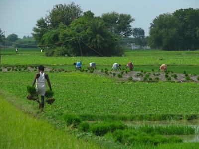 Economía verde y agricultura: mirada crítica
